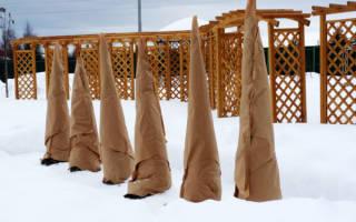 Как утеплить молодые саженцы на зиму