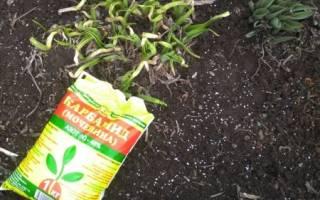 Чем удобрять огород весной